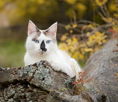Photograph - Autumn Cat by Theresa Tahara