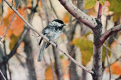 Autumn Chickadee  Print by Maria Angelica Maira