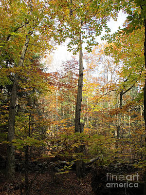 Photograph - Autumn Clearing by Linda Marcille