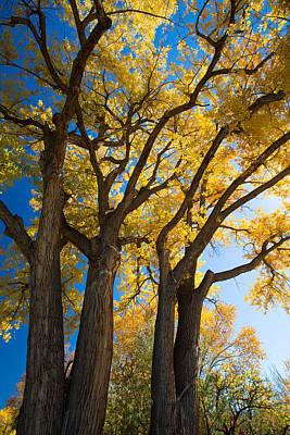 Autumn Color Art Print by Allen Lefever