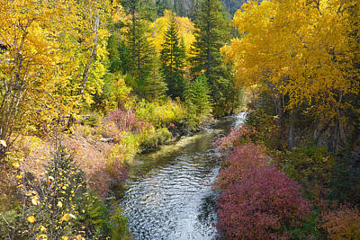 Photograph - Autumn Color Along Spearfish Creek by Dakota Light Photography By Dakota