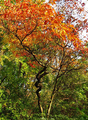 Photograph - Autumn Color At Old Woman Creek 2 by Shawna Rowe
