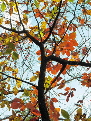 Photograph - Autumn Color At Sheldon Marsh by Shawna Rowe
