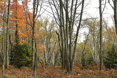 Photograph - Autumn Color - Marion Brooks Natural Area by Joel E Blyler