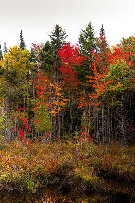 Photograph - Autumn Color Near Raquette Lake by David Patterson