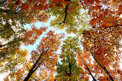 Branches Photograph - Autumn Color Overhead 1 by Deborah Smolinske