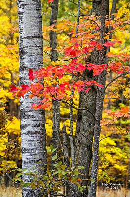 Photograph - Autumn Color by Peg Runyan