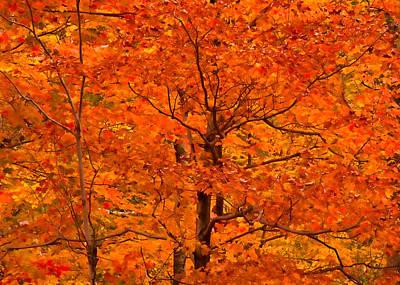 Autumn Color Splash Art Print