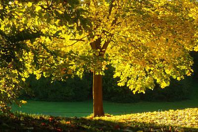 Photograph - Autumn Colors 10 by Rudi Prott