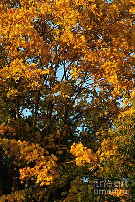 Photograph - Autumn Colors 11 by Rudi Prott