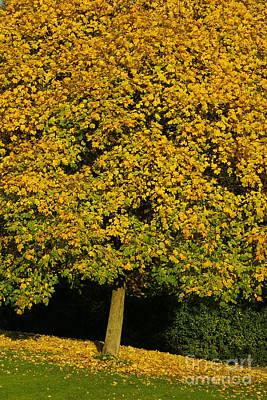 Photograph - Autumn Colors 12 by Rudi Prott