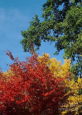 Photograph - Autumn Colors 14 by Rudi Prott
