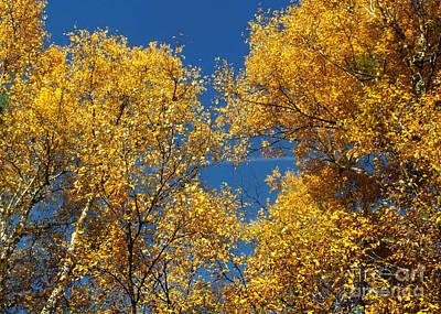 Photograph - Autumn Colors 15 by Rudi Prott