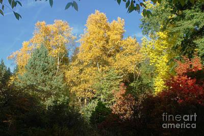 Photograph - Autumn Colors 17 by Rudi Prott