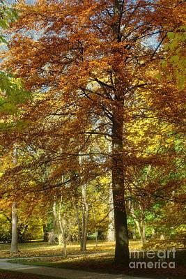 Photograph - Autumn Colors 19 by Rudi Prott