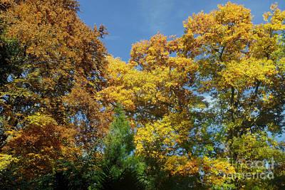 Photograph - Autumn Colors 21 by Rudi Prott