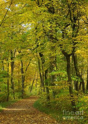 Photograph - Autumn Colors 22 by Rudi Prott