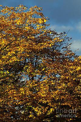 Photograph - Autumn Colors 5 by Rudi Prott