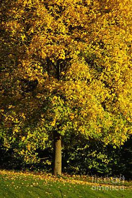 Photograph - Autumn Colors 8 by Rudi Prott