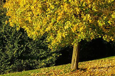 Photograph - Autumn Colors 9 by Rudi Prott