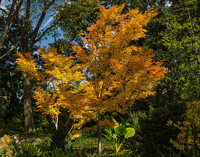 Photograph - Autumn Colors At Dallas Arboretum  by Allen Sheffield