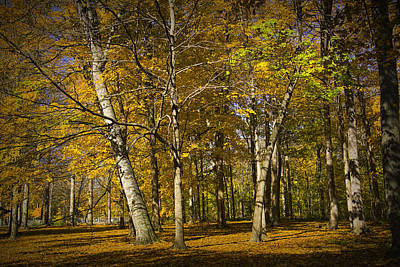 Hager Wall Art - Photograph - Autumn Colors At Hager Park No.1163 by Randall Nyhof