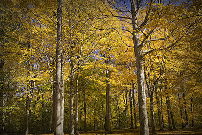 Hager Wall Art - Photograph - Autumn Colors At Hager Park No.1188 by Randall Nyhof