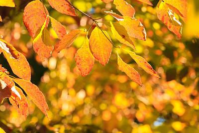 Photograph - Autumn Colors by Ben Graham