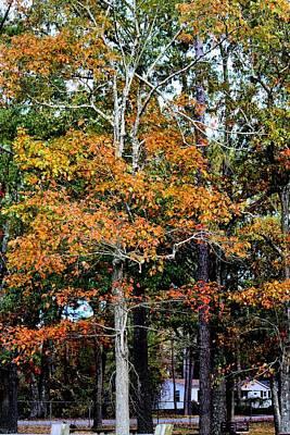 Autumn Colors Art Print by Carolyn Ricks