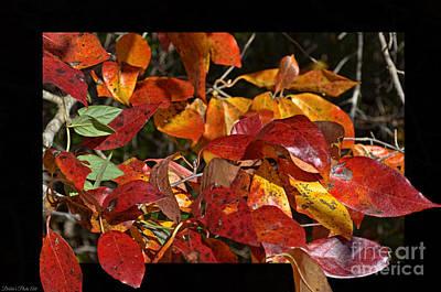 Photograph - Autumn Colors by Debbie Portwood