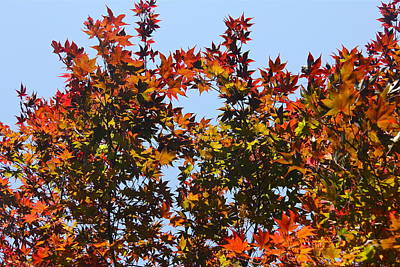 Photograph - Autumn Colors by Denise Mazzocco