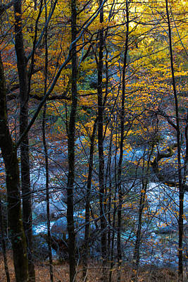 Photograph - Autumn Colors by Edgar Laureano