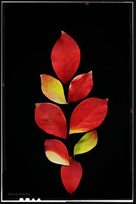 Autumn Colors Art Print by Gerlinde Keating - Galleria GK Keating Associates Inc