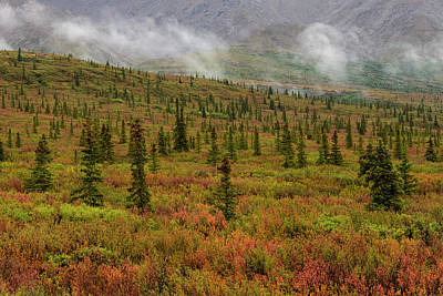 Photograph - Autumn Colors In Denali National Park by Bob Smith