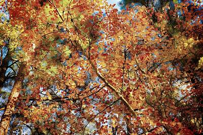Photograph - Autumn Colors In North Carolina by John Pagliuca