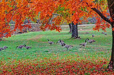 Photograph - Autumn Colors In The Park by Deb Buchanan