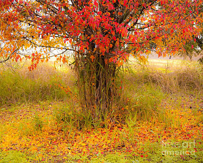 Photograph - Autumn Colors by Jacki Soikis