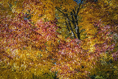 Photograph - Autumn Colors by Maria Coulson