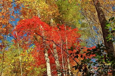 Art Print featuring the photograph Autumn Colors by Patrick Shupert