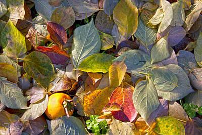 Photograph - Autumn Colors by Raffaella Lunelli