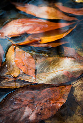 Photograph - Autumn Colors by Shelby  Young