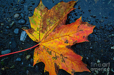 Photograph - Autumn Colors by Tikvah's Hope