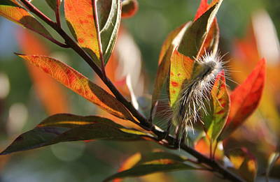Photograph - Autumn Colors by Tracy Male