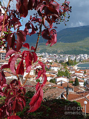 Photograph - Autumn Colour - Ohrid - Macedonia by Phil Banks
