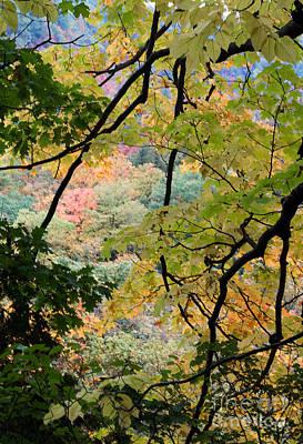 Photograph - Autumn Colour Palette by Barbara McMahon