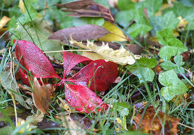 Photograph - Autumn Colours   by Ivelin Donchev