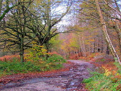 Photograph - Autumn Colours  by Joyce Woodhouse
