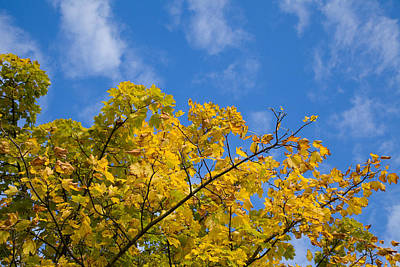 Photograph - Autumn Colours On An October Morning . by Paul Lilley