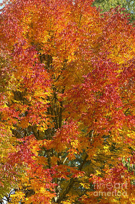 Photograph - Autumn Colours by Sharon Talson