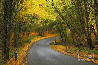 Autumn Colours Art Print by Stephen Dowdell